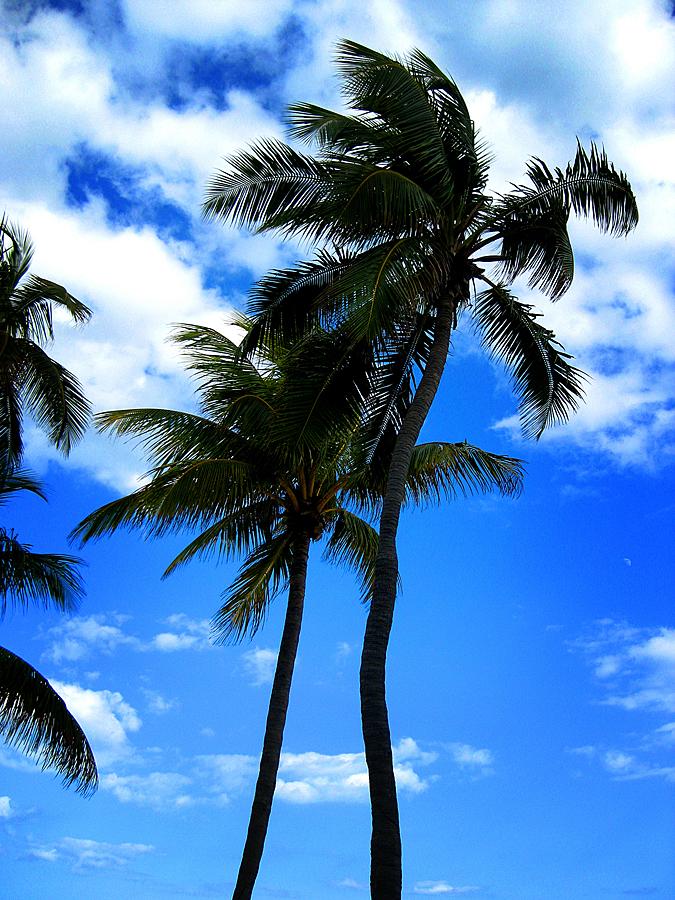 Ft. Lauderdale08 225csm