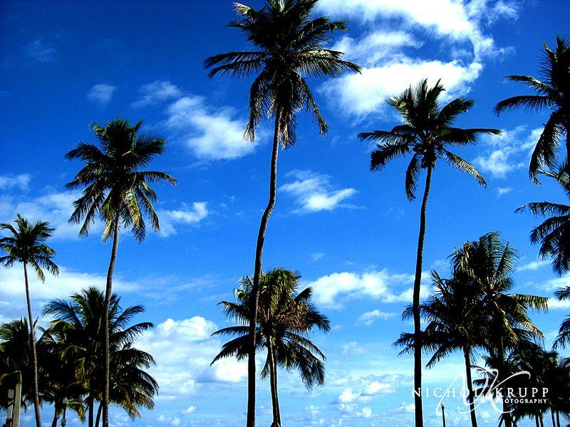 Ft. Lauderdale08 047csm
